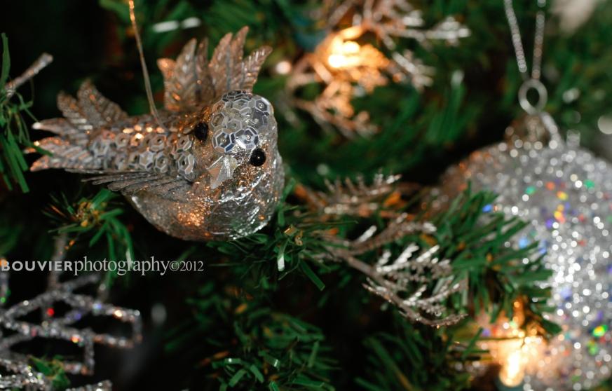 A little birdie told me it's Christmas.