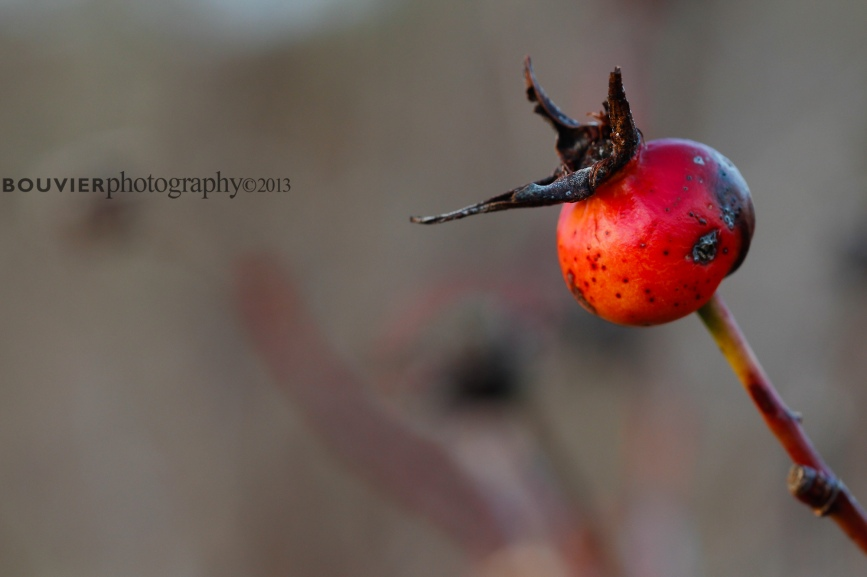 solitary berry