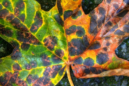 Fall in Goldstream Park