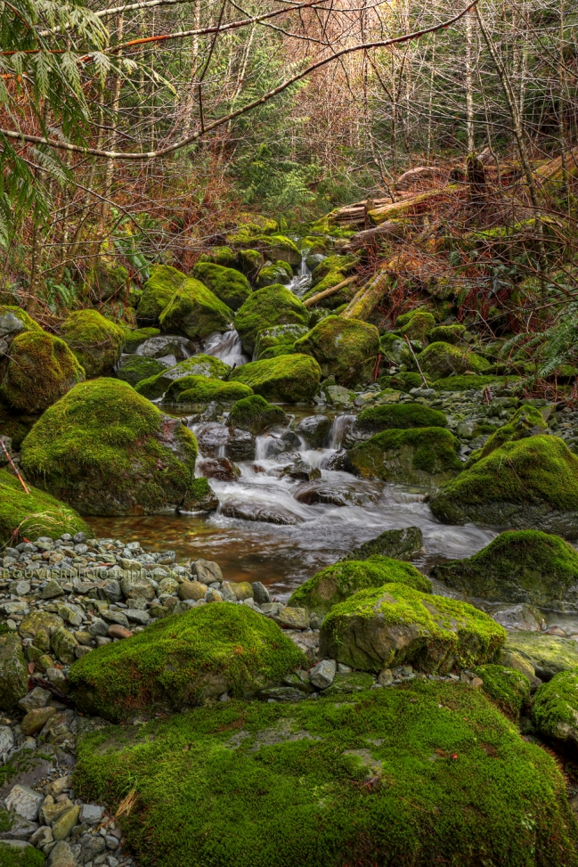 Jordan River, cascading brook, Vancouver Island, forest, BC