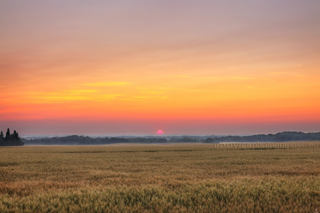 northern Saskatchewan, RM of Mervin, sunset, grain field, smoky horizon, Canada