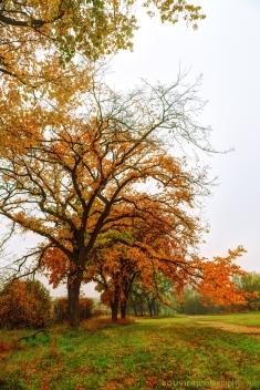 Vivid Foliage